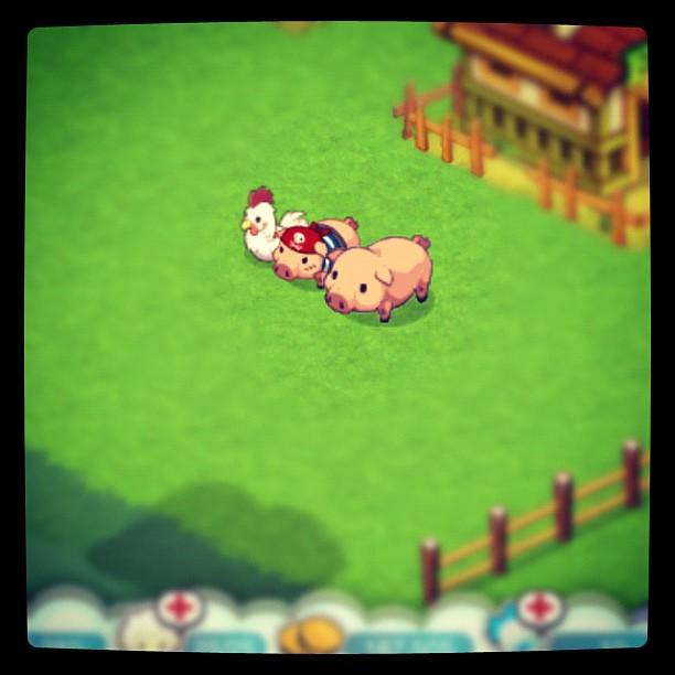 Tiny Farm: The Pirate Piggy and parents~!