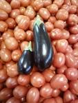 Eggplants~!