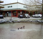 Chinatown Ducks