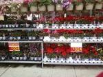 Expensive Walmart Flowers